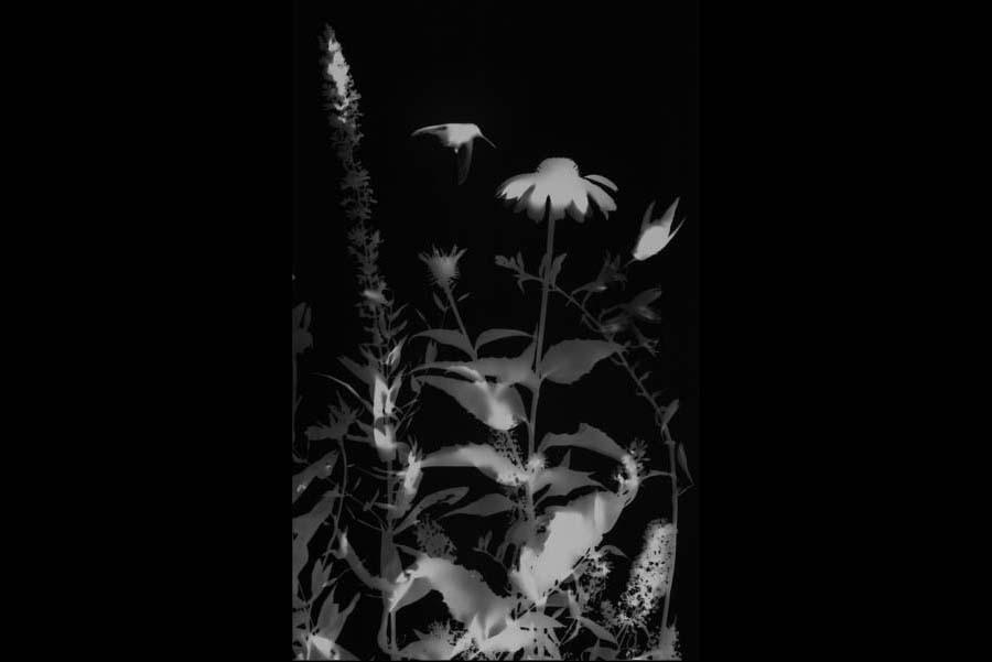 Garden #1 (detail).