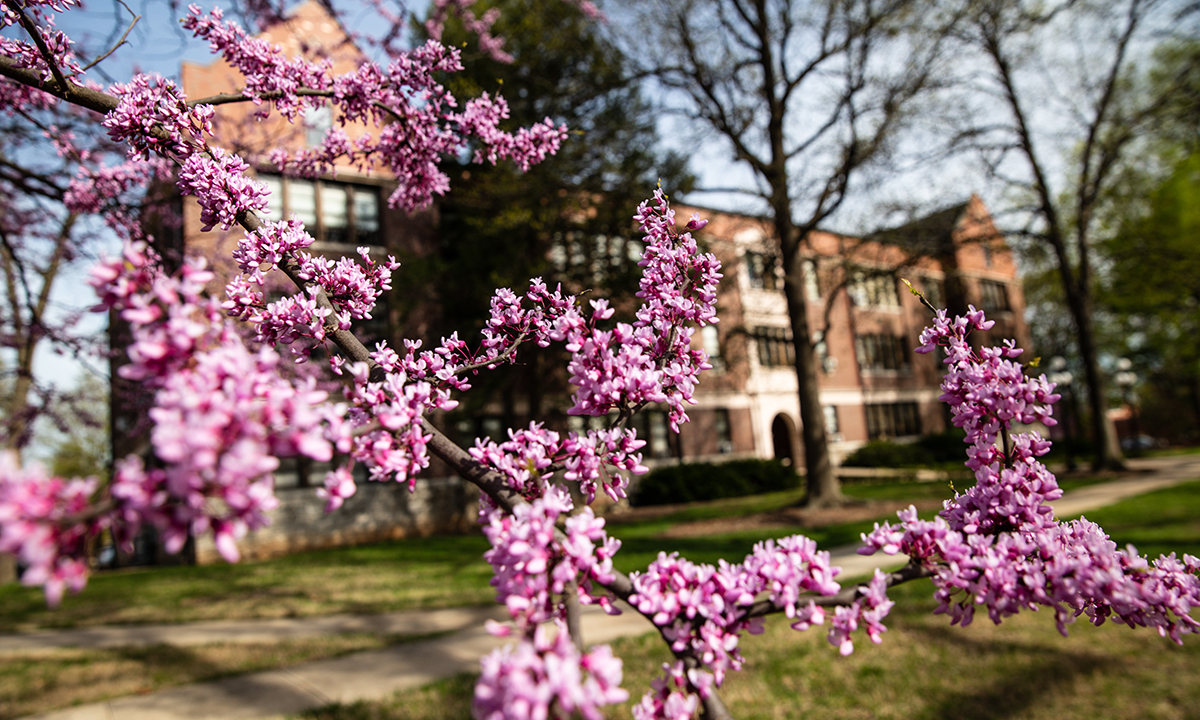 Spring flowers on campus.